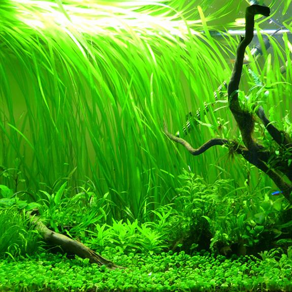 Background Aquatic Plants