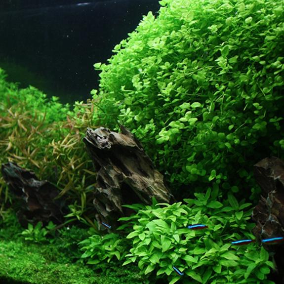 Foreground Aquatic Plants