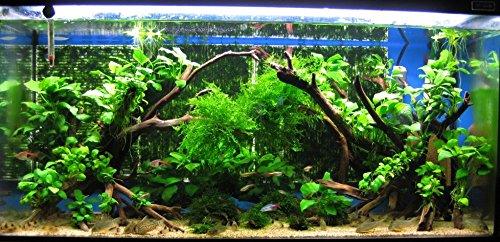 Aquarium Spider Wood 8 12 Inches Aquarium Plants